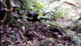 Download Video Prajurit Yonif 641/ Beruang mencari tapal batas indonesia ( ENTIKONG ) UNGU ( indonesia ) Music Gratis